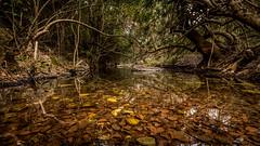 Guadalora Creek (pptruco) Tags: creek arroyo guadalora hornachuelos brook