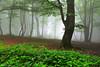 Enchanted Forest (Hector Prada) Tags: bosque niebla hojas verano verde árbol mágico encantado misterioso forest fog leaves summer green tree magic mystic dreamy charmed enchanted naturaleza nature hectorprada paísvasco basquecountry