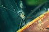 break (Marty Hogan) Tags: us41 menomineecounty upperpeninsula michigan fordtruck rust abandoned bullethole