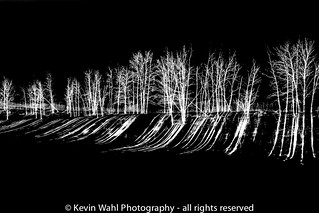 inverse trees