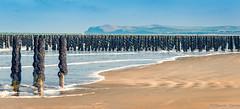 Au pieds des moules (musette thierry) Tags: vert moule musette thierry paysage landscape vue mer nikon d800 28300mm plage reflex cap blanc nez france pasdecalais hautsdefrance