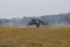 Tree (Jurek.P) Tags: mazury masuria poland polska landscape tree krajobraz jurekp sonya77