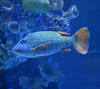 Wonders of Wildlife (Adventurer Dustin Holmes) Tags: fish animal aquaticlife wondersofwildlife aquarium nationalmuseumandaquarium nationalmuseumaquarium tropicalfish saltwateraquarium saltwaterfish oceanfish oceanlife underthesea 2018