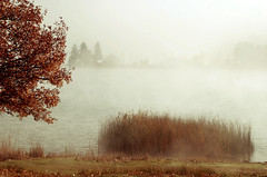 Peace (jimiliop) Tags: trees fog lake reeds winter chapel silhouettes water nature calming peaceful feneos nostalgic atmosphere mist grass forest