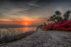Sunset and Palms (Michael F. Nyiri) Tags: bougainvillea palmtrees sunset palosverdesestates lunadabay ocean pacificocean palosverdespeninsulacalifornia southerncalifornia sea