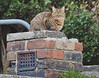 The Glare (kanefairless) Tags: cat green animal stone brick stare glare