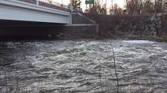 February 25, 2018 Along Mill Creek, Dexter, Michigan (marylea) Tags: feb25 2018 hudsonmillsmetropark hudsonmills metropark water flooding movie video