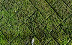 Green moss on the old brick wall (phuong.sg@gmail.com) Tags: ancient architecture background beautiful beauty brick cement close closeup color damp design detail dirty environment forest fresh grass gray green grow growth grunge horizontal landscape leaf lichen line moss natural nature old outdoor park pattern plant rock rural stone surface texture textured tropical wall