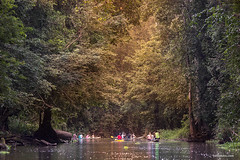 Caraparu (www.celsolobo.com) Tags: celsolobo amazon amazônia caraparu caraparu2017 ciriodecaraparu fotografo oqueviporondeandei viladecaraparu wwwcelsolobocom édopará photographyamazon amazonia fccgp ribeirinho rio círio cirio