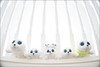 Cute Chubbers.jpg (mikeyp2000) Tags: high cute baby bannister arrangement linedup whitebackground arranged babies background seal soft seals cuddly lookingup toys key white