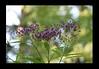 Duke Gardens July 2015 9.09.04 PM (LaPajamas) Tags: nc flora dukegardens gardens
