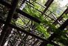 Echafaudages en bois (StephanExposE) Tags: japon japan asia asie stephanexpose canon 600d 1635mm 1635mmf28liiusm kiyomizudera bois arbre tree architechture temple kyoto