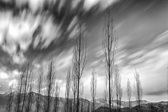 memoirs of winter (dr_zook81) Tags: ladakh leh landscape monochrome blackandwhite travel destination mountain beautiful outdoor tree sind exposure clouds sky explore nature dry death scenic scenery photo canon6d wide angle