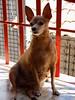 Mika (Phelipi Máximo) Tags: cachorro dog house maranhão são luís brasil brazil