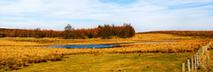 Near Auchengray 23 Feb 2018 0002.jpg (JamesPDeans.co.uk) Tags: view sunny forthemanwhohaseverything landscape plants gb printsforsale panorama weather strathclyde clouds pond unitedkingdom sun nature scotland lanarkshire trees countryside wwwjamespdeanscouk britain europe greatbritain landscapeforwalls jamespdeansphotography uk digitaldownloadsforlicence
