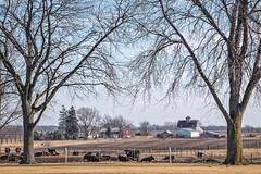 Sunday Morning Pasture (David DeCamp) Tags: prairie farm field fence landscape morning rural barn cow