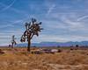 drought conditions (Maureen Bond) Tags: ca maureenbond snowcappedmountains desert boat joshuatrees droughtconditions clouds