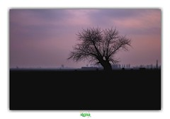 WHO'S GONNA WATCH YOU DIE ? (régisa) Tags: coucher soleil adinkerke depanne lapanne sunset arbre belgique belgië deathcabforcutie vlaanderen westvlaanderen polderlandschap