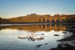 Trematon Sunrise (Timothy Gilbert) Tags: rivertamar saltash sunrise trematoncastle birds panasonic swans viaduct cornwall gx8 panasonic1235mmf28x tamar