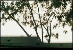 171227-5215-XM1.jpg (hopeless128) Tags: australia shadows 2017 wall tree sydney alexandria newsouthwales au