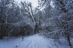 February 17, 2018 (tylerjacobs) Tags: sony a6000 samyang rokinon 12mm f20 ultra wide angle snow nature winter forest hiking snowy trees tree wintery cold blizzard illinois lisle dupage danada preserve woodlands