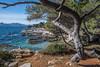Ile de Sainte Marguerite - France - 06 (daumy) Tags: cannes ile sainte marguerite paysage arbre caillou rocher mer montagne decor midi mediterranée vague crique
