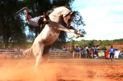 Vagner Cardoso e Payador de La Encimera (Eduardo Amorim) Tags: gaúcho gaúchos gaucho gauchos cavalos caballos horses chevaux cavalli pferde caballo horse cheval cavallo pferd pampa campanha fronteira quaraí riograndedosul brésil brasil sudamérica südamerika suramérica américadosul southamerica amériquedusud americameridionale américadelsur americadelsud cavalo 馬 حصان 马 лошадь ঘোড়া 말 סוס ม้า häst hest hevonen άλογο brazil eduardoamorim gineteada jineteada