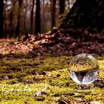 Lensball in Lichen thumbnail