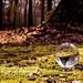 Lensball in Lichen