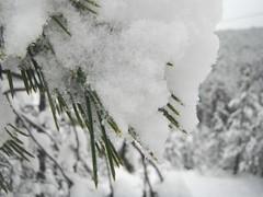Snow [Explored 23.02.2018.] (jecadim) Tags: strmenicazima winter forest mountain serbia srbija strmenica