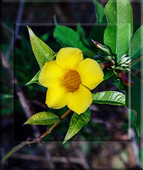 Relax (jimd_603) Tags: 2018 february florida flower takeaim relax