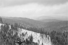 Ski touring (Piotr Skiba) Tags: beskidy beskid żywiecki złatna poland pl mountains snow winter forest clouds bw monochrome ilfordpan100 skitour landscape piotrskiba