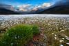 Whiteland (W.I.L.D. Giorgio) Tags: approvato alps landscape gavia stelvio eriofori sunset lago bianco