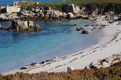 IMG_7536 (mudsharkalex) Tags: california pacificgrove pacificgroveca
