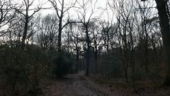 Un dimanche en forêt de Roumare (jeanlouisallix) Tags: rouen roumare seine maritime haute normandie france forêt forest arbres sylviculture sousbois paysaages landscape sentiers chemins randonnée