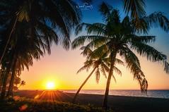 Sunset under palms ... volcano island Camiguin, Philippines (nigel_xf) Tags: philippines philippinen island insel palmen palms sunset sonnenuntergang meer sea sand volcano volganoisland camiguin nigel nigelxf d300 nikon vsfototeam