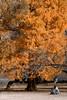 IMG_3793 (Matthew_Li) Tags: red leaf japan maple leaves