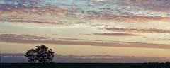 03 Paysage Lauragais (floLMA) Tags: lauragais arbre coucherdesoleil ciel