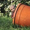 Peekaboo Groot (jezbags) Tags: peekaboo groot hottoys sideshow guardiansofthegalaxy marvel marvelstudios toys toy actionfigure figure garden pot plant macro macrophotography macrodreams canon canon80d 80d 100mm closeup upclose