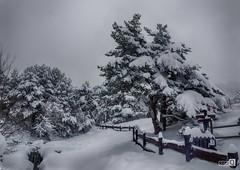 Valla Nevada (JoseQ.) Tags: nieve paisaje invierno arbol nevada frio cielo blanco cotos navacerrada madrid nubes campo aire