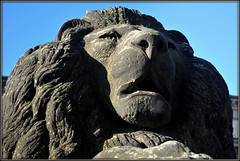 Stone Lion (* RICHARD M (7+ MILLION VIEWS)) Tags: stonelion lionstatue stone sculpture statues sculptors williamgrinsellnicholl stgeorgeshall limestreetliverpool britishlions lions animalscupltures animalstatues stgeorgesplateau liverpool merseyside europeancapitalofculture capitalofculture unescoworldheritagesite worldheritagesites liverpoolculturalquarter liverpoollandmarks lioncouchant unescomaritimemercantilecity maritimemercantilecity lionsculpture england greatbritain britain britishisles unitedkingdom uk lightandshade portraits portraiture