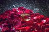 1 (oliurrahmanpritom) Tags: adobe aperture addflicker art abstract ambient snap scout shadow sunlight scence decisive dof digital flicker fotografie flickriver foto fotographe fine flickeriver grain flower greatphotographers golden gorgeous horizontal lens lights lightroom moments moment macro model nikon nature nikonflickraward natural naturallight view bangladesh best beautiful bokeh commons collection click creative camera colorful colors collecting commoms collective xplorstarts xplore explore exploring excellent eye ring goldring engagementring pritoms photography