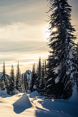 Snow and Sun (ValeTer_) Tags: nikond7500 mtrainiernationalpark nationalpark usa wa washingtonstate rainier snow winter nikon