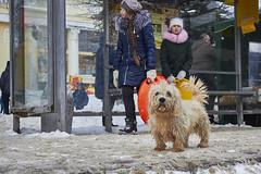 Homeless Dog (Staropramen1969) Tags: dog animals winter russia hund tiere russland perro animales invierno rusia