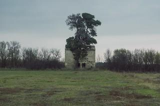 L'arbre et la maison abandonnée