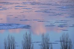 L'hiver au crépuscule (Patrice StG) Tags: pentax kp pentaxart sigma18300 winter hiver couleurs colours pink rose blue bleu clouds nuages dusk crépuscule couchant stlawrenceriver stlaurent river fleuve fleuvestlaurent québec gimp darktable