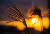 Bokeh sunset (Maria Eklind) Tags: dof bokeh ribersborg winter himmel öresundsparken city outdoor light ribban malmö depthoffield reflection sunset malmölive sunlight spegling solnedgång sky sweden skånelän sverige se
