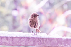(frogghyyy) Tags: bokeh bird macro macrophotography animal nature natureshot snow march natura details dettagli macroscene naturephoto outdoor