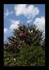 Duke Gardens July 2015 9.10.06 PM (LaPajamas) Tags: nc flora dukegardens gardens