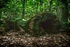 Mossy Log (treydavisonline) Tags: nikon d7100 tokina wide angle 16mm 28 f28 moss mossy forest woods trees log logs ground landscape photography photos 2017 michigan grayling hartwick state park
